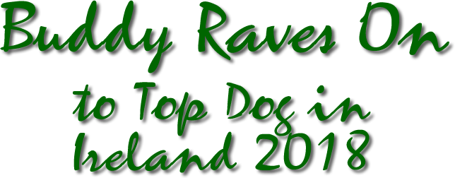 Buddy Raves On to Top Dog In Ireland 2018